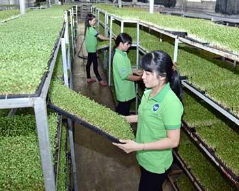 Giải pháp phát triển nông nghiệp hữu cơ bền vững