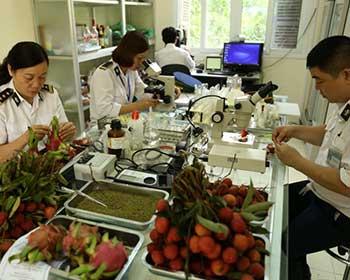 Quy chuẩn kỹ thuật quốc gia về yêu cầu đối với vật thể thuộc diện kiểm dịch thực vật nhập khẩu