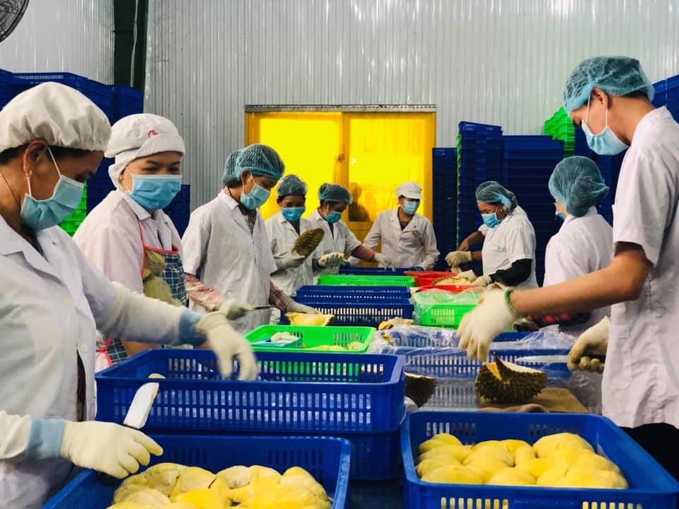 Công ty TNHH Thương mại Dịch vụ Happy Durian áp dụng, đạt chứng nhận ISO 22000 thành công được tư vấn bởi ICERT