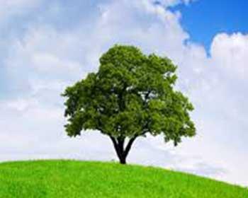 Tiêu chuẩn ISO 14001- cung cấp khung chuẩn cho các tổ chức để bảo vệ môi trường
