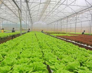 Ngành nông nghiệp: Thúc đẩy sản xuất hàng hóa đáp ứng tiêu chuẩn chất lượng