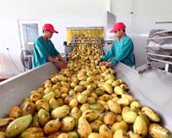Loạt tiêu chuẩn ISO - công cụ giúp sản xuất nông sản, thực phẩm bền vững