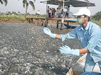 Dịch vụ Công bố, Chứng nhận thức ăn thủy sản